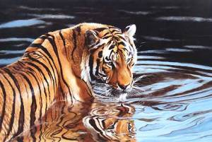 Reflections-Tiger-in-Water