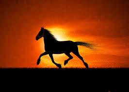 Free Horse