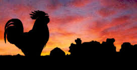 Rooster at Sunrise