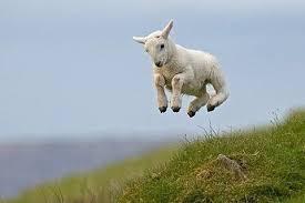 Woohoo Sheep