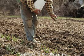 Farmer Sowing Seeds 2
