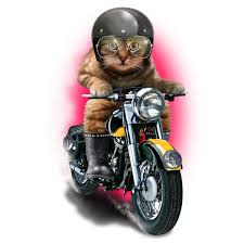 Cat On Motorcyle 2