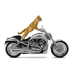 Cat on Motorcyle