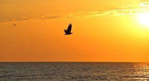 Eagle Over Ocean