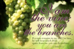 God is the Vine