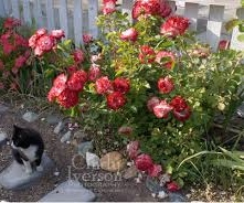 Cat with Roses