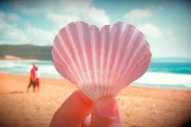 Heart Seashell