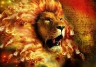 Male Lion on Fire