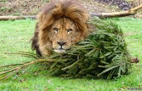 Male Lion with Tree.jpg