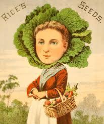 Alice's Seed.jpg