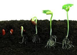 Seed Growing.jpg