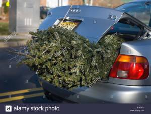 christmas-tree-in-the-trunk-of-a-car-a1k8tm