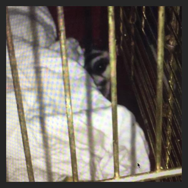 Imprisoned Animal